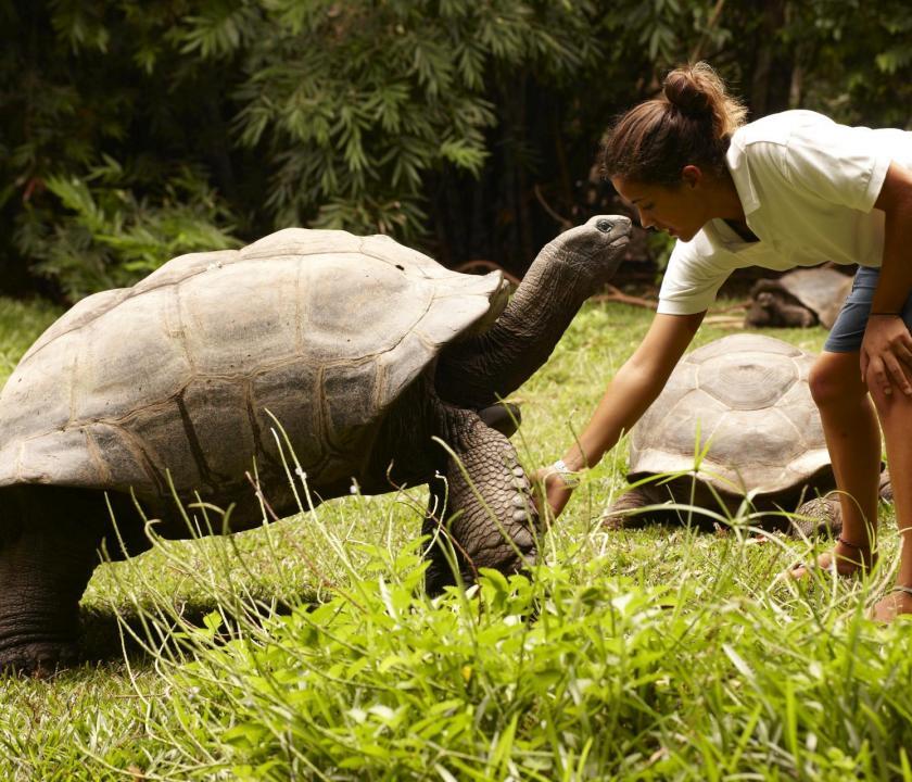 Fregate Island Private - teknős etetés (Seychelle szigeteki utazások)