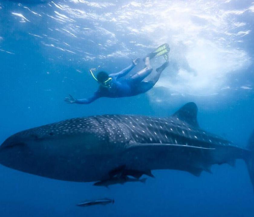 Lily Beach Resort & Spa - búvárkodás (Maldív-szigeteki utazások)