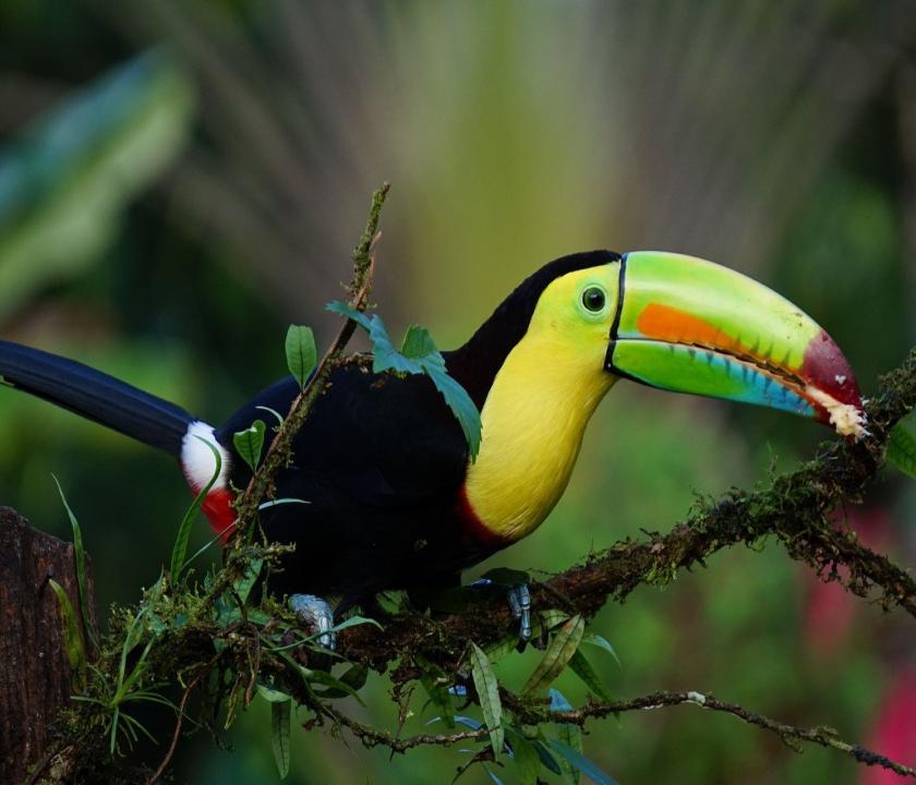Klasszikus Costa Rica körutazás 13 nap / 12 éjszaka (Costa Rica-i utazások)